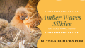 Free-Ranging Your Chickens